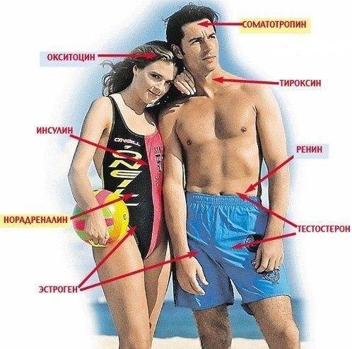 vliyanie-seksa-na-virabotku-endorfinov