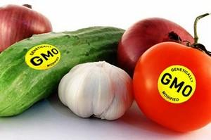 gennomodificirovannye-produkty